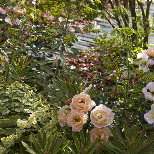 Jardin priv olivier hostiou architecte paysagiste nantes for Paysagiste nantes